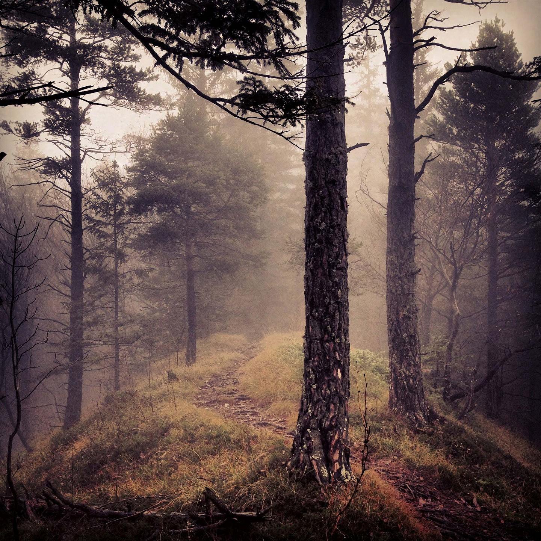 Mythy Forest