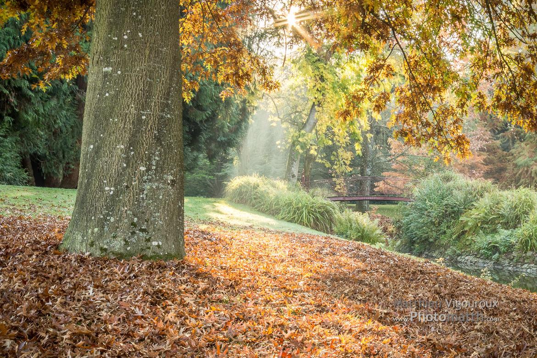 Jardin du Parc en automne, au lever du soleil.