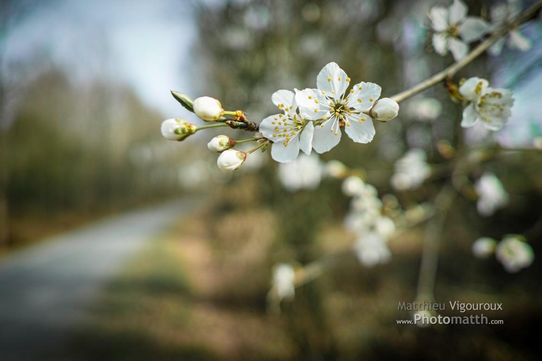 Perso | Début de printemps