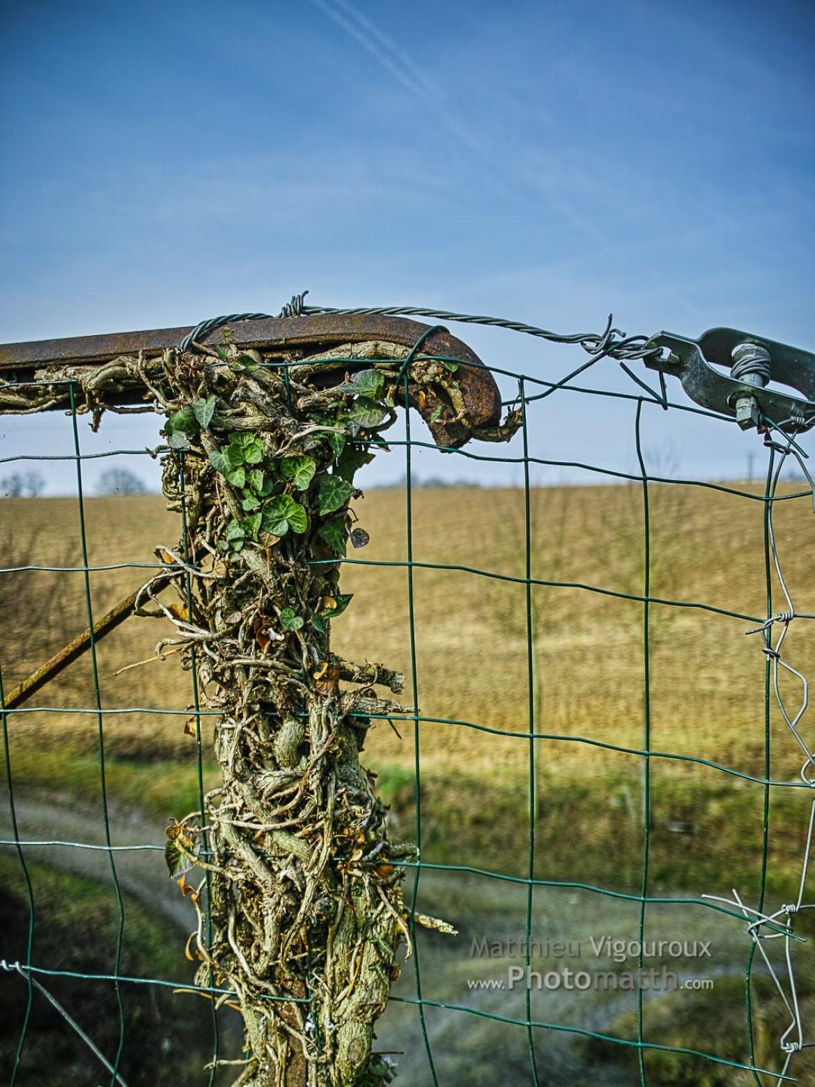 Série | La nature reprend ses droits #1