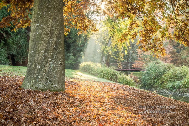 Perso | Jardin du Parc en automne| Vitré